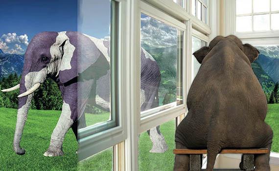 elefant57