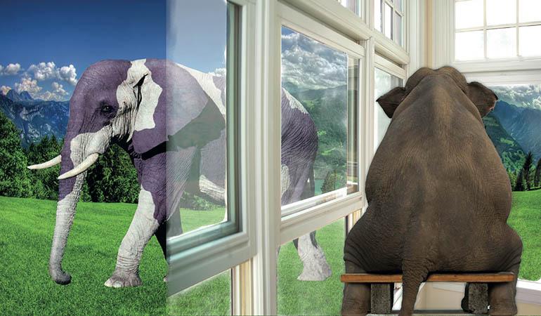 elefant77